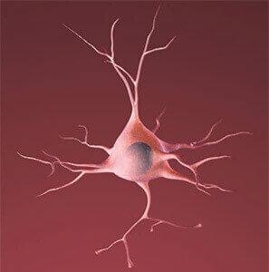 hersencel