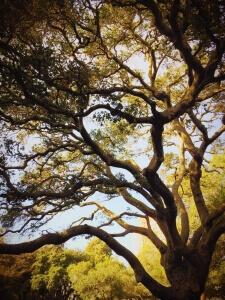 tree-690913